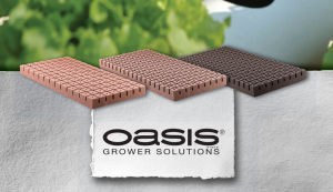 oasis-front-banner-block